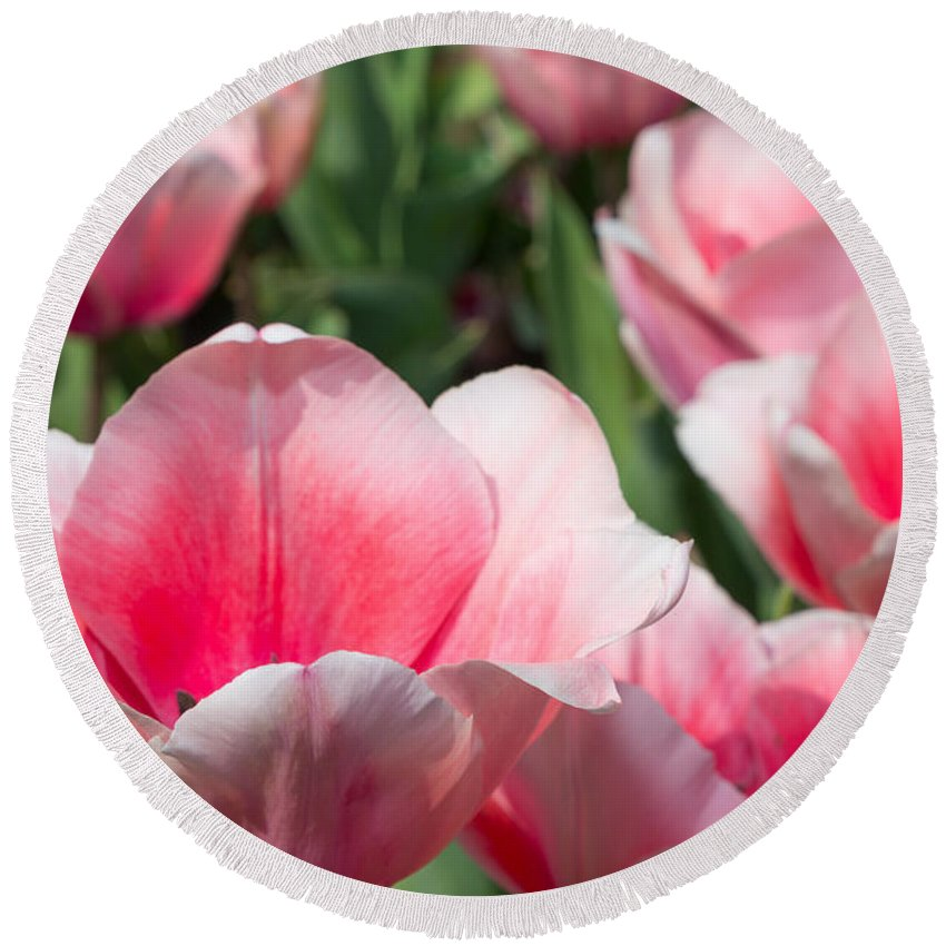 Steven Green Round Beach Towel featuring the photograph Pink Tulip Garden by SR Green