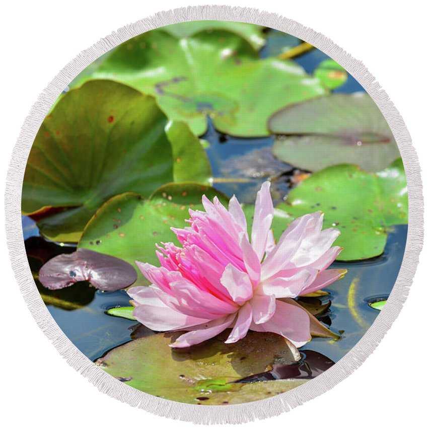 Diagonal Round Beach Towel featuring the photograph Pink Water Lily Series by Soni Macy
