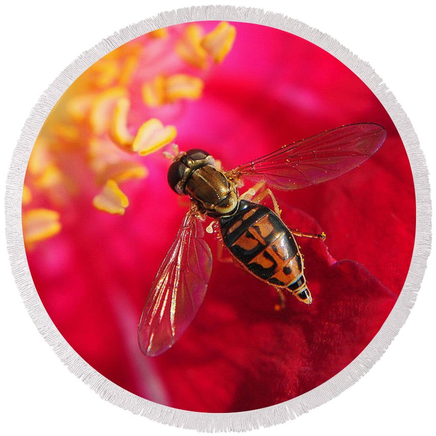 Bee Round Beach Towel featuring the photograph Pollen Feast by Frozen in Time Fine Art Photography