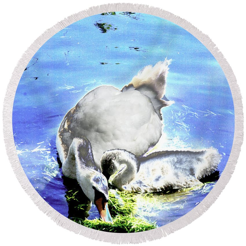 Psychedelic Round Beach Towel featuring the photograph Psychedelic Mute Swan And Cygnet Feeding by Peter Lloyd