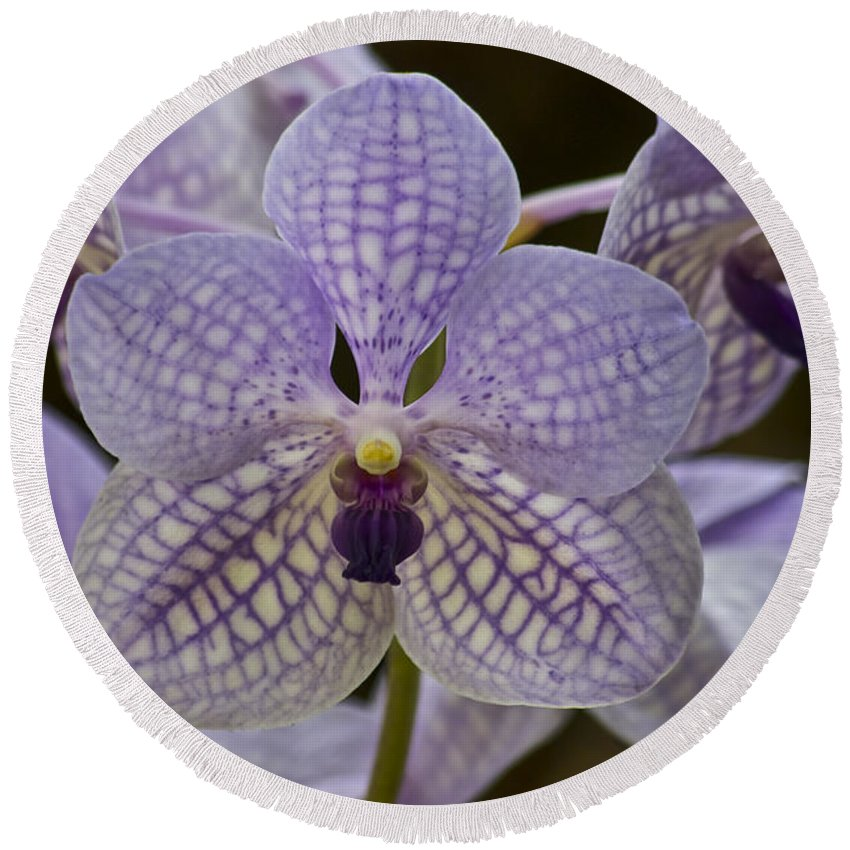 Purple Orchids Round Beach Towel featuring the photograph Purple Orchids by Michael Peychich