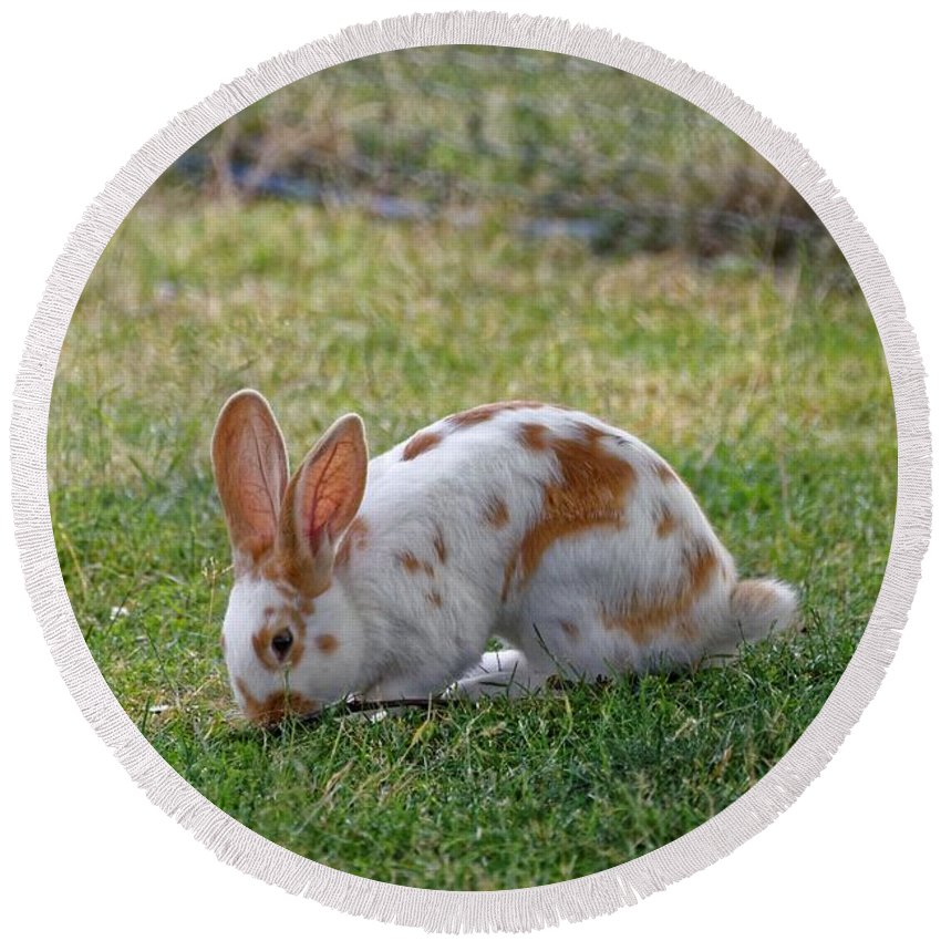 Rabbit Round Beach Towel featuring the photograph Rabbit by FL collection