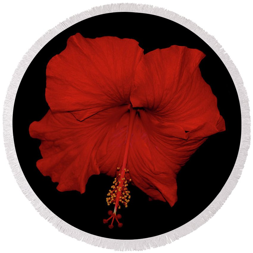 Red Hibiscus Round Beach Towel featuring the photograph 1- Red Hibiscus by Joseph Keane
