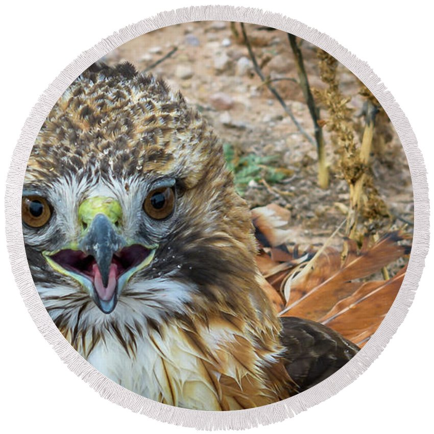 Red-tailed Hawk Round Beach Towel featuring the photograph Red-tailed Hawk -5 by David Pine