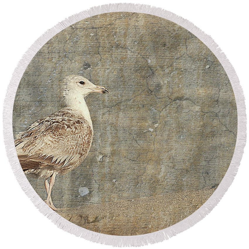 Jersey Shore Round Beach Towel featuring the photograph Seagull - Jersey Shore by Angie Tirado