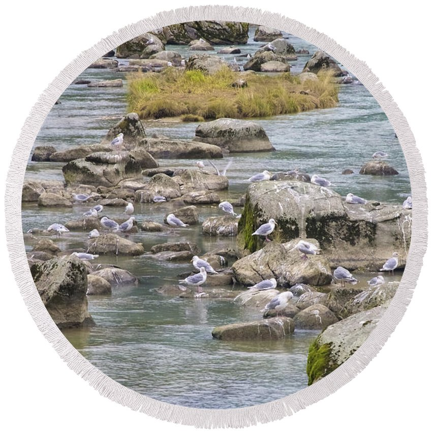 Chilkoot Round Beach Towel featuring the photograph Seagulls On The Rocks by Richard J Cassato