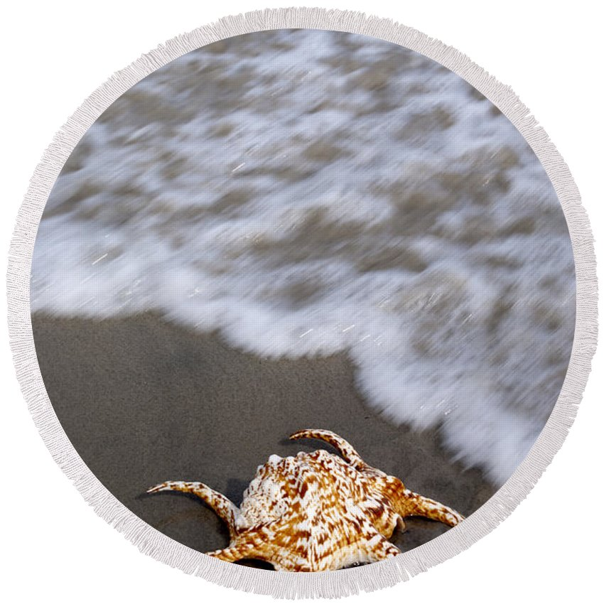 Spider Conch Round Beach Towel featuring the photograph Spider Conch Shell by Anthony Totah