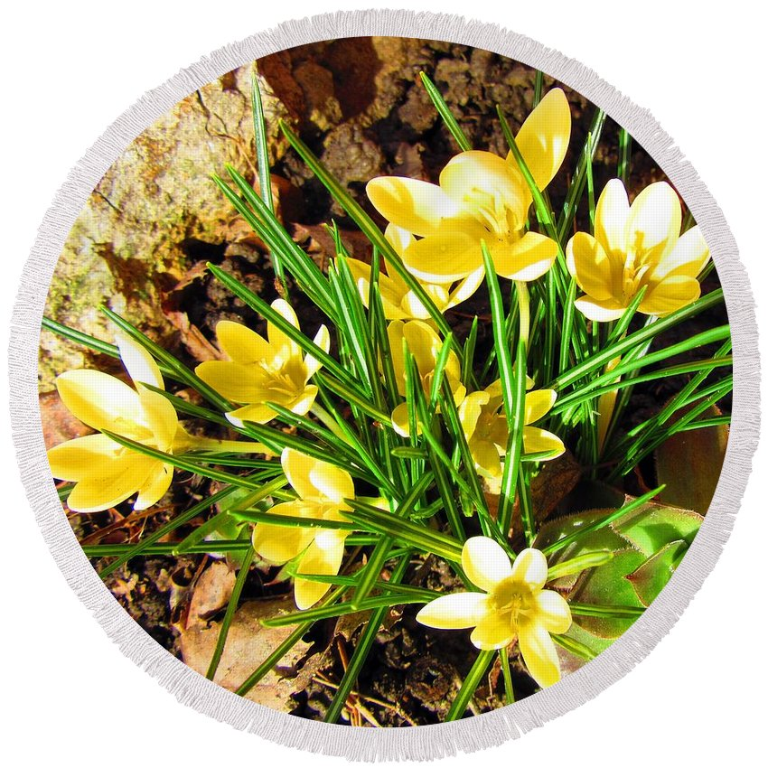 Crocus Round Beach Towel featuring the photograph Spring by Vesna Martinjak