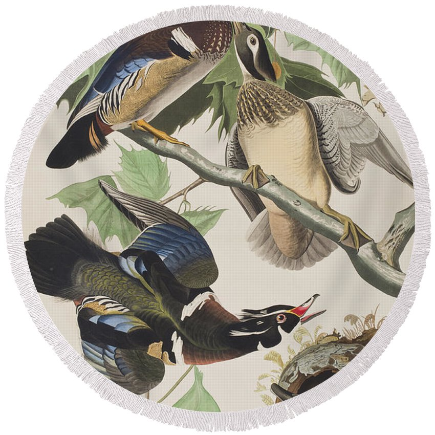 Summer Or Wood Duck Round Beach Towel featuring the painting Summer Or Wood Duck by John James Audubon
