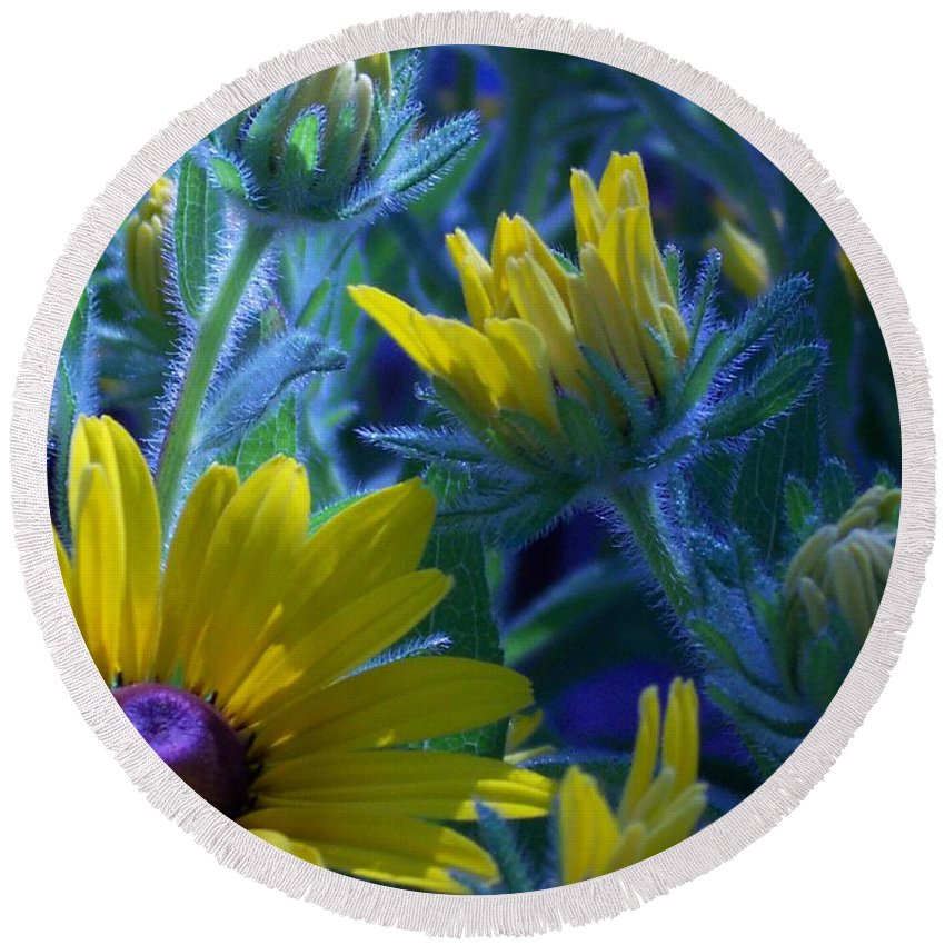 Sun Daisy Round Beach Towel featuring the photograph Sun Glory Series by Marika Evanson
