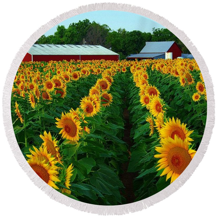 Red Barns Round Beach Towel featuring the photograph Sunflower Field #4 by Karen McKenzie McAdoo