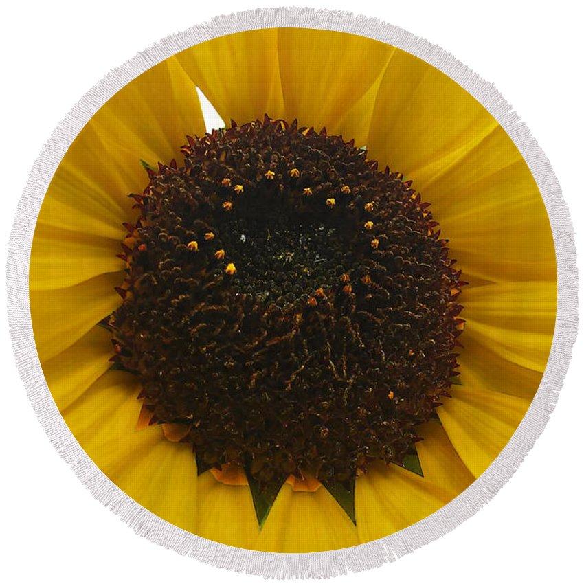Sunflower Round Beach Towel featuring the photograph Sunflower by Jasna Dragun