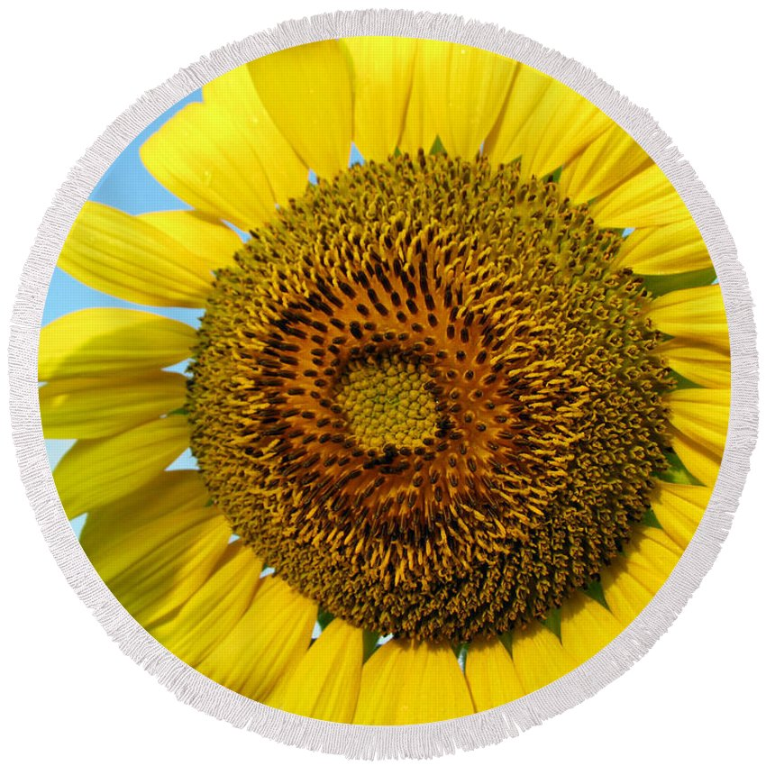 Sunflower Round Beach Towel featuring the photograph Sunflower Series by Amanda Barcon