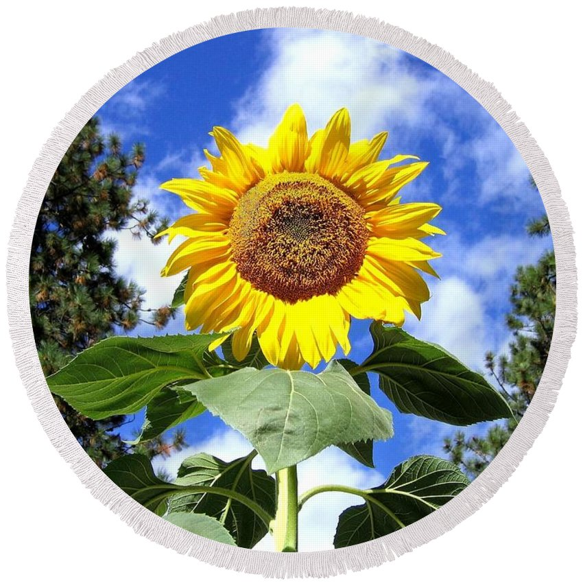 Sunflower Round Beach Towel featuring the photograph Tall And Sunny by Will Borden