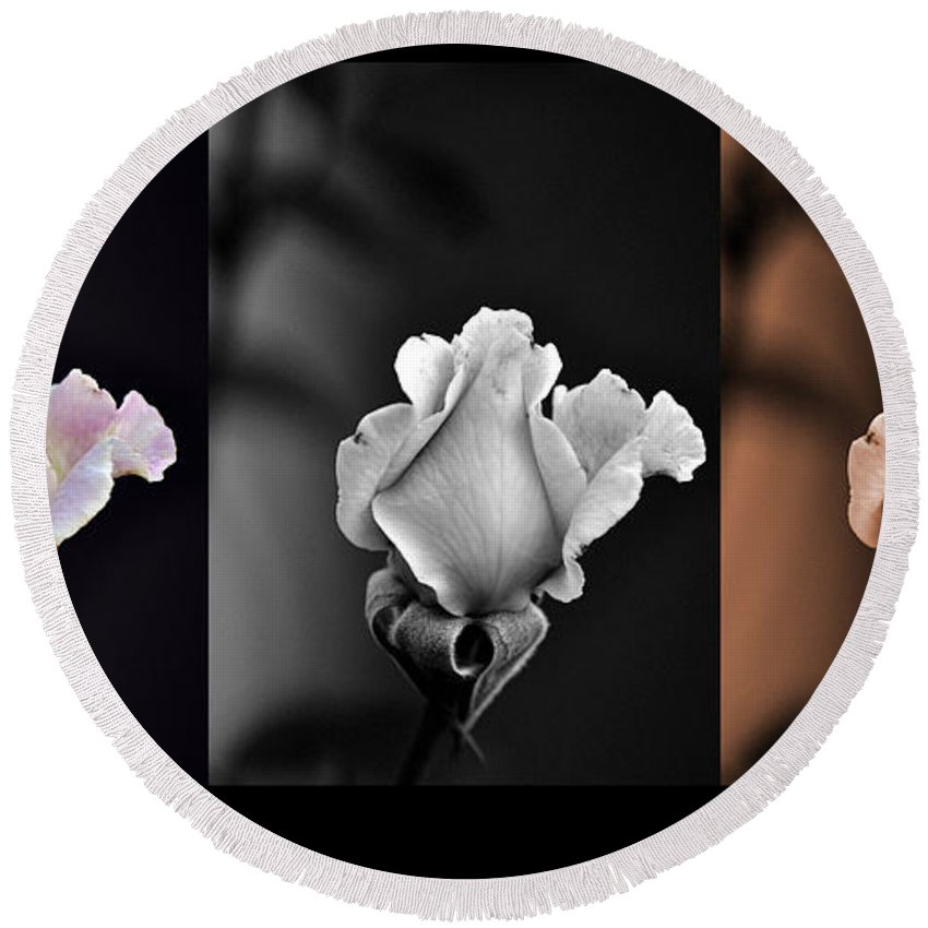 Clay Round Beach Towel featuring the photograph The Rose by Clayton Bruster