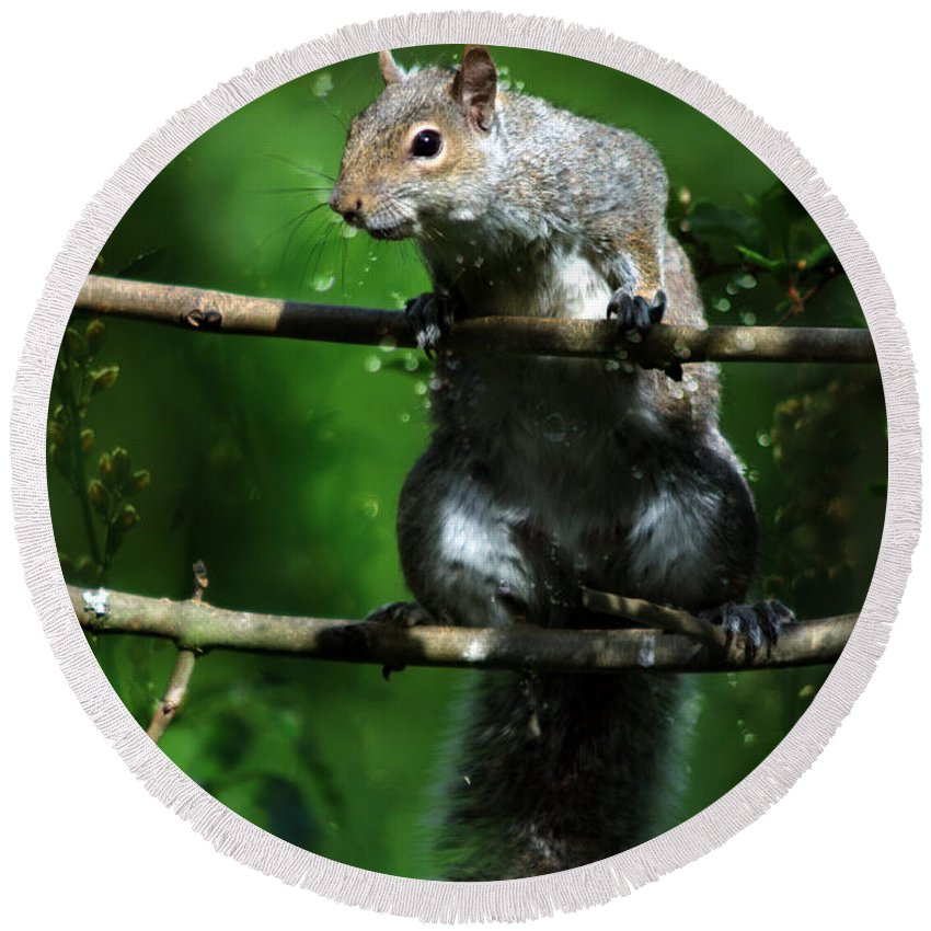 Squirrel Round Beach Towel featuring the photograph The Squirrel From Fairyland by Angel Ciesniarska
