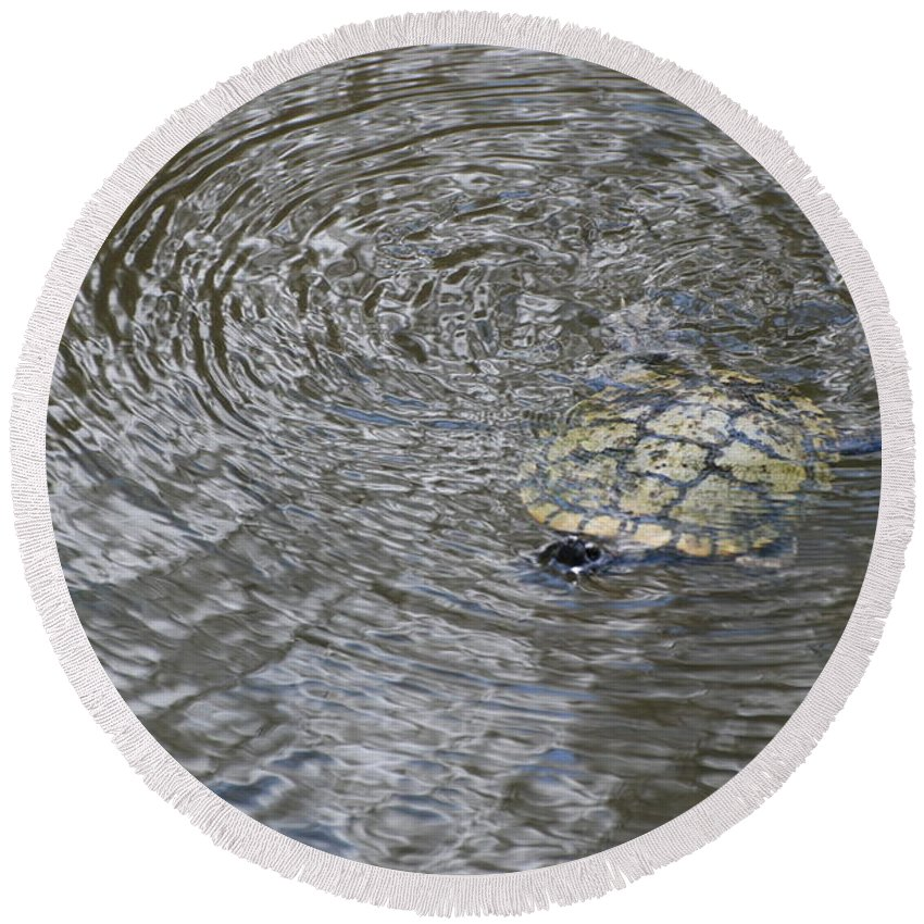 Water Round Beach Towel featuring the photograph The Swimming Turtle by Rob Hans