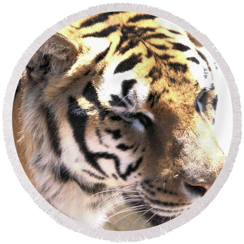 Tiger Round Beach Towel featuring the photograph Tiger by Wendy Fox