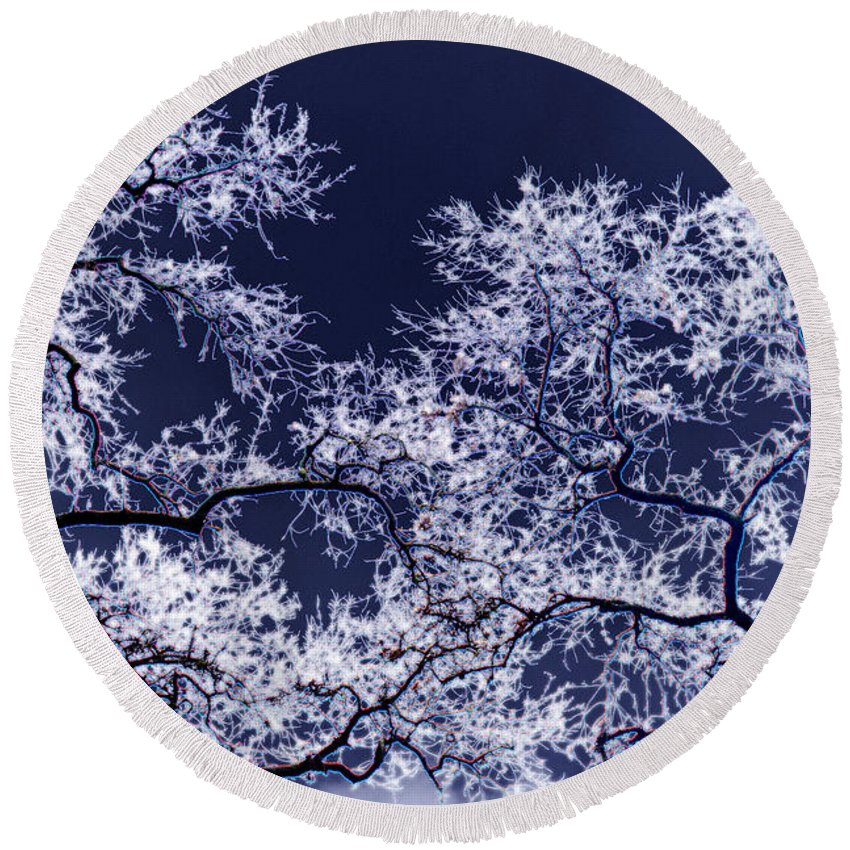 Tree Round Beach Towel featuring the photograph Tree Fantasy 17 by Lee Santa