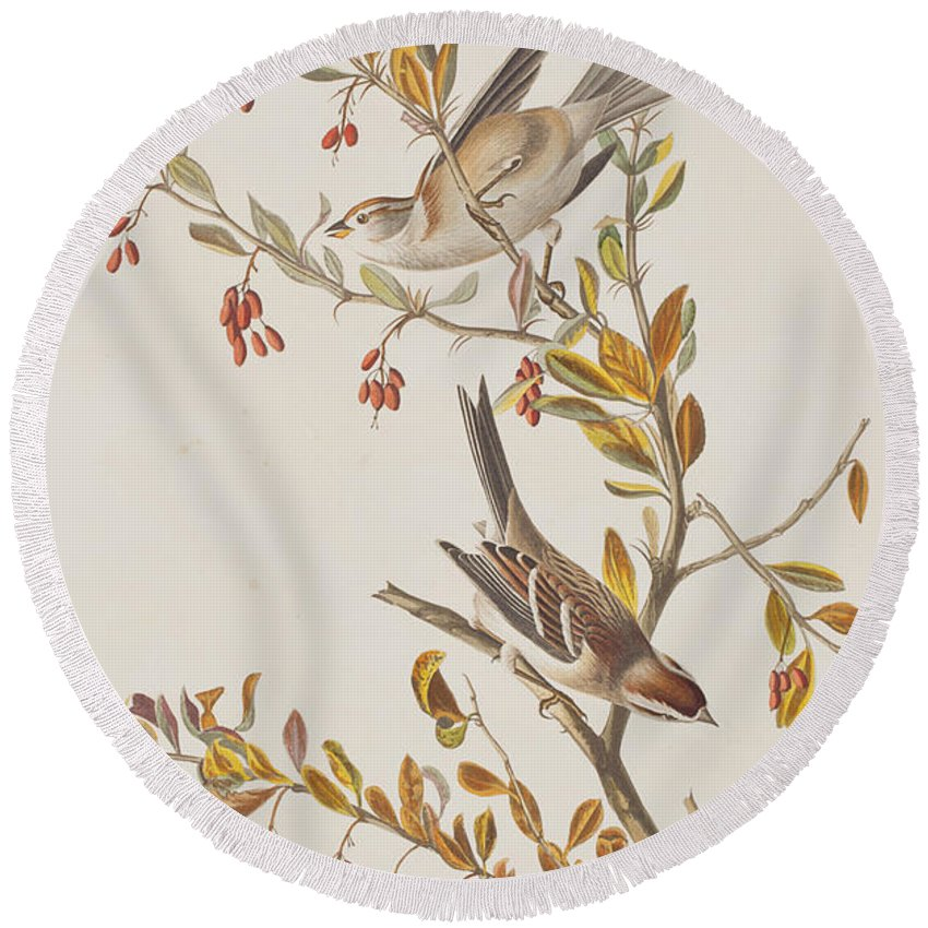 Sparrow Round Beach Towel featuring the painting Tree Sparrow by John James Audubon
