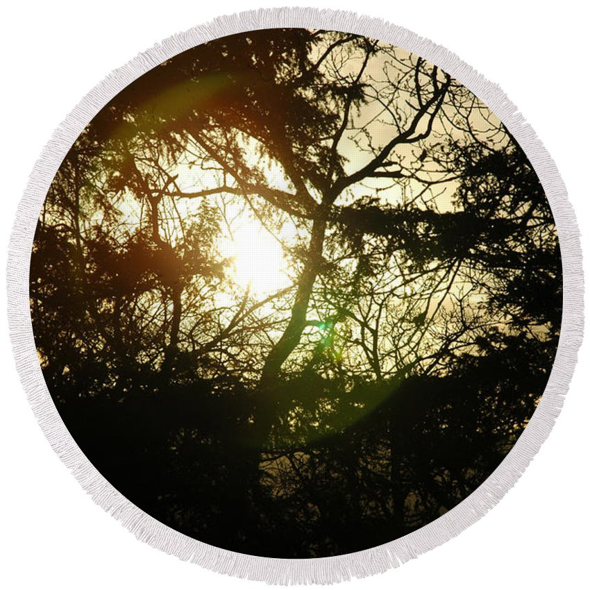 Fine Art - Trees Round Beach Towel featuring the photograph Trees by Jenny Potter