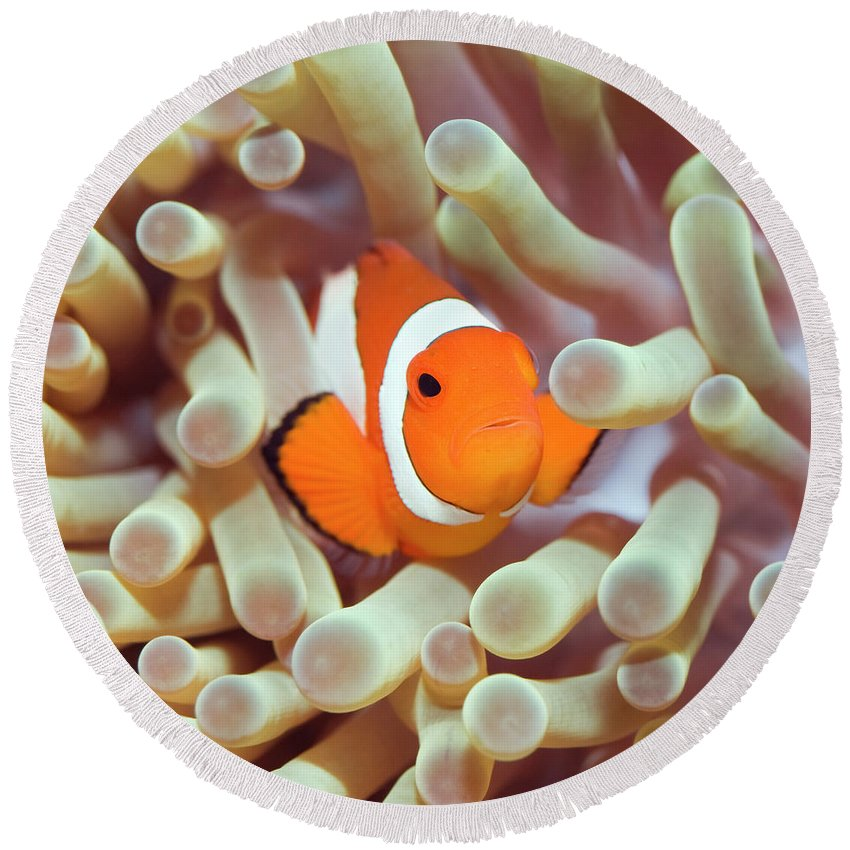 Anemonefish Beach Products