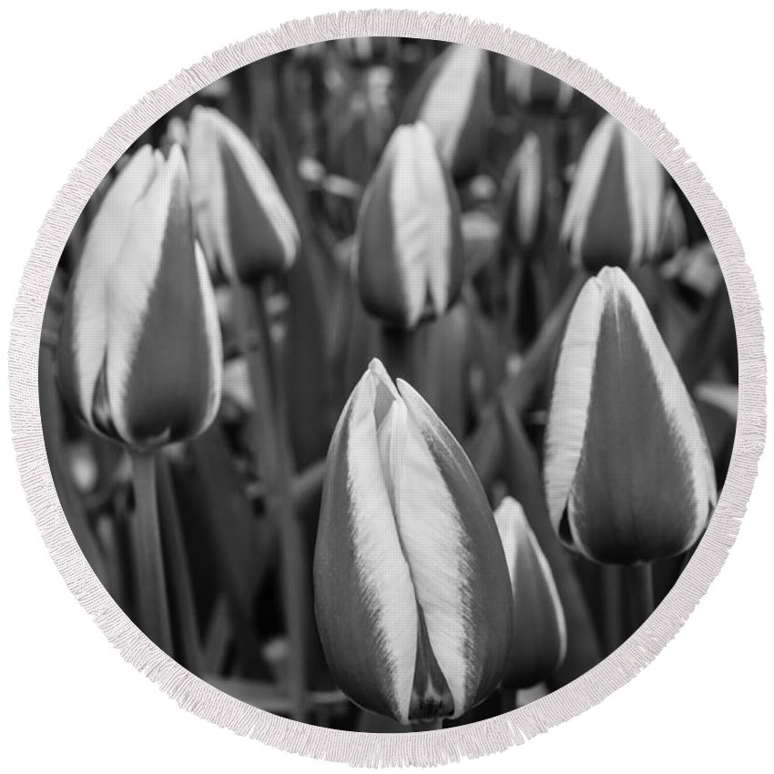 Black And White B & W Bandw B&w Monochrome Monochromatic Grey Gray Scale Dutch Pink Flower Tulip Tulips Flowers Gardening Netherlands Keukenhof Europe European Gardens Garden Travel Purple Destination Springtime Colorful Colourful Cultivation Growing Colors Colours Bloom Blooming Natural Growth Planted Plant Leaves Blossom Seasonal Season Stems Stem Detail Beautiful Delicate Flora Field Spring Flowerbed Agriculture Tones Detail Closeup Close Round Beach Towel featuring the photograph Tulips 3 by Marcin Rogozinski