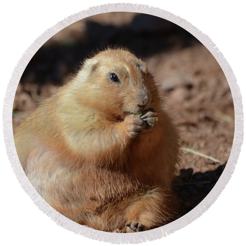 Fat Round Beach Towel featuring the photograph Very Large Overweight Prairie Dog Sitting In Dirt by DejaVu Designs