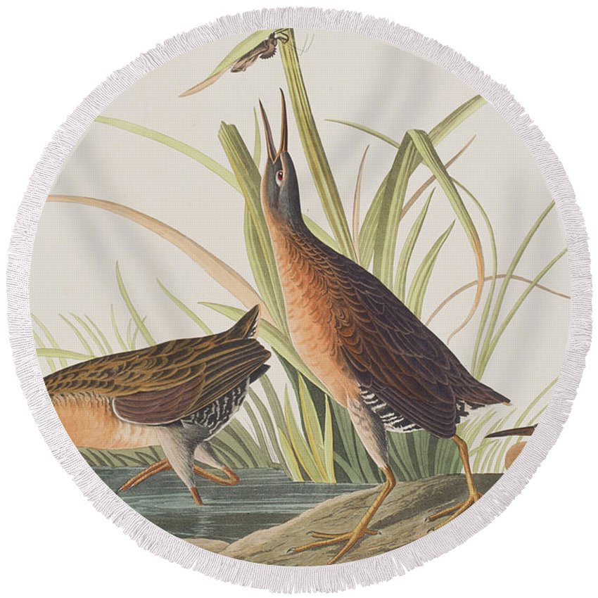 Virginia Rail Round Beach Towel featuring the painting Virginia Rail by John James Audubon