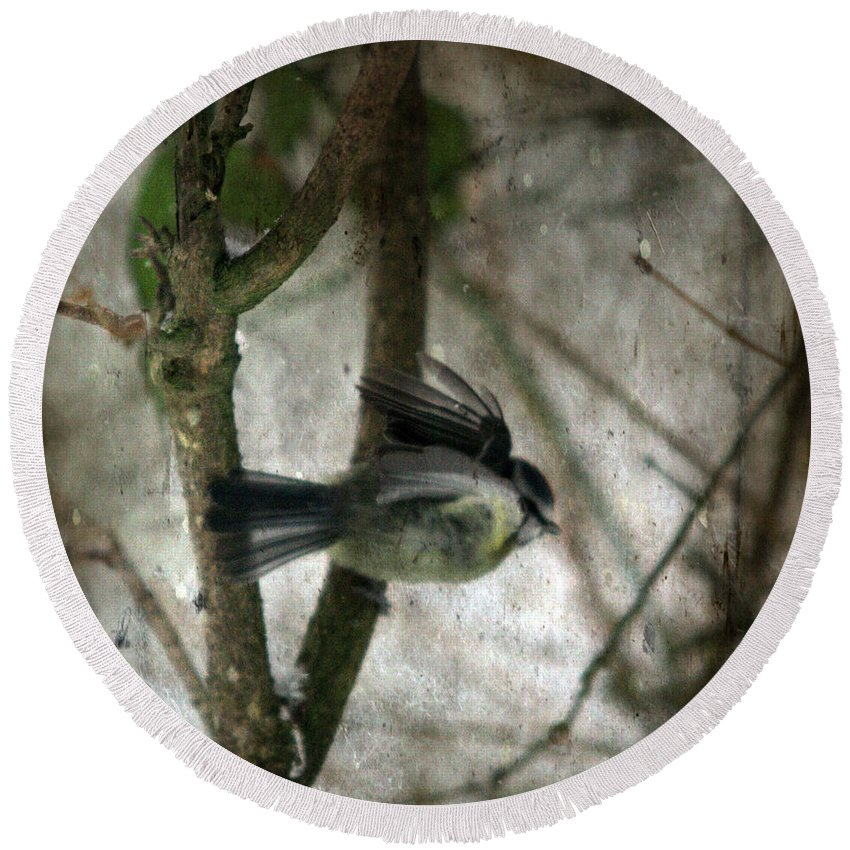 Blue Tit Round Beach Towel featuring the photograph Waiting For Spring by Angel Tarantella