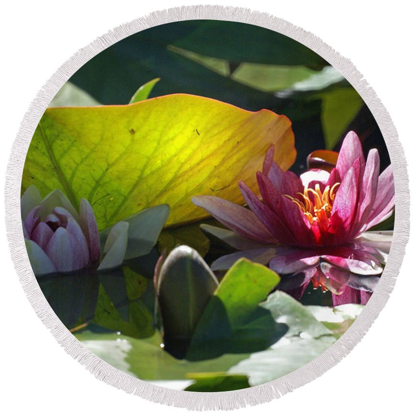 Water Lily Round Beach Towel featuring the photograph Water Lily by Heather Coen