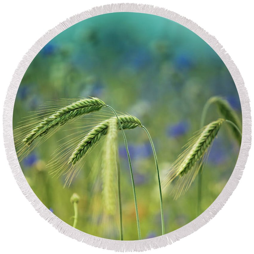 Wheat Round Beach Towel featuring the photograph Wheat And Corn Flowers by Nailia Schwarz