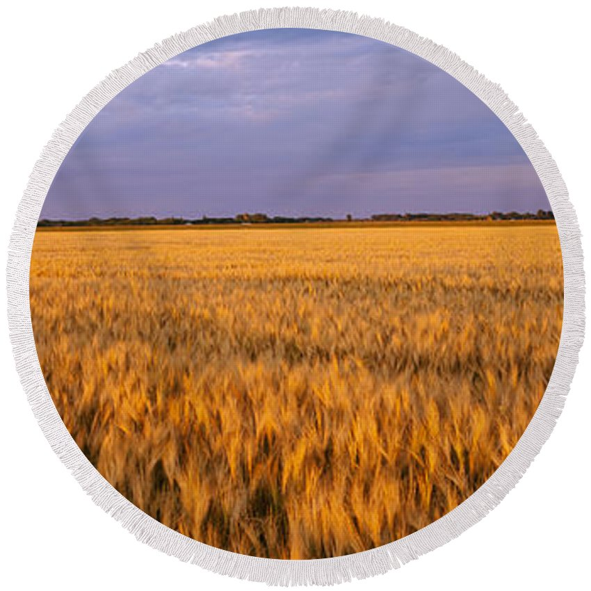 Photography Round Beach Towel featuring the photograph Wheat Crop In A Field, North Dakota, Usa by Panoramic Images