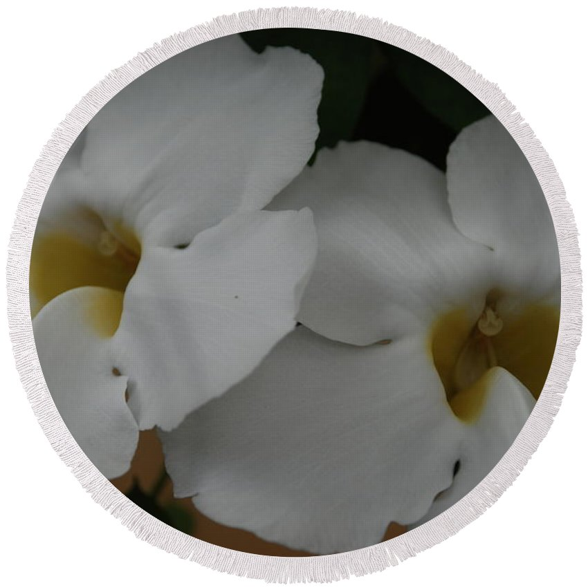 Macro Round Beach Towel featuring the photograph White Orchids by Rob Hans