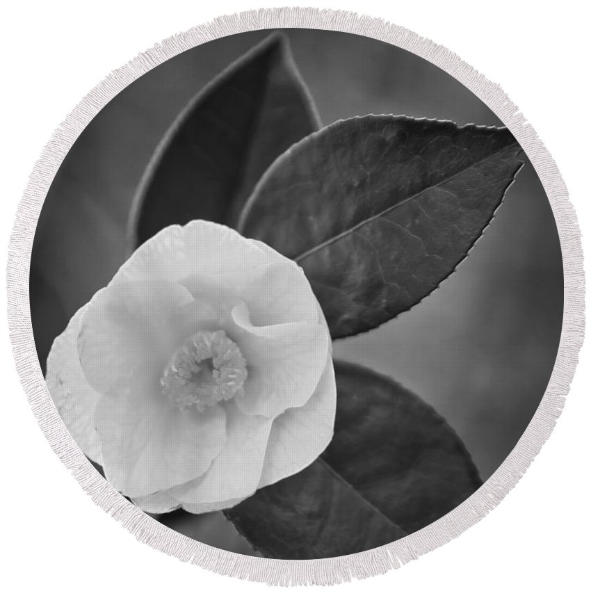Flower Round Beach Towel featuring the photograph White Rose by Alex Art and Photo