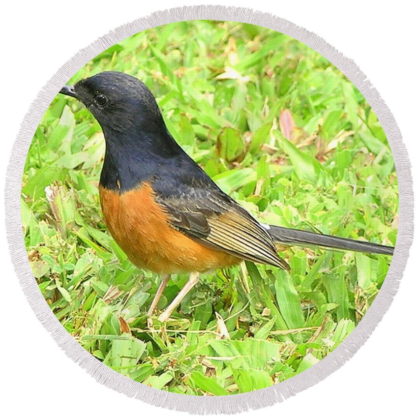 Black Round Beach Towel featuring the photograph White-rumped Shama by Mary Deal