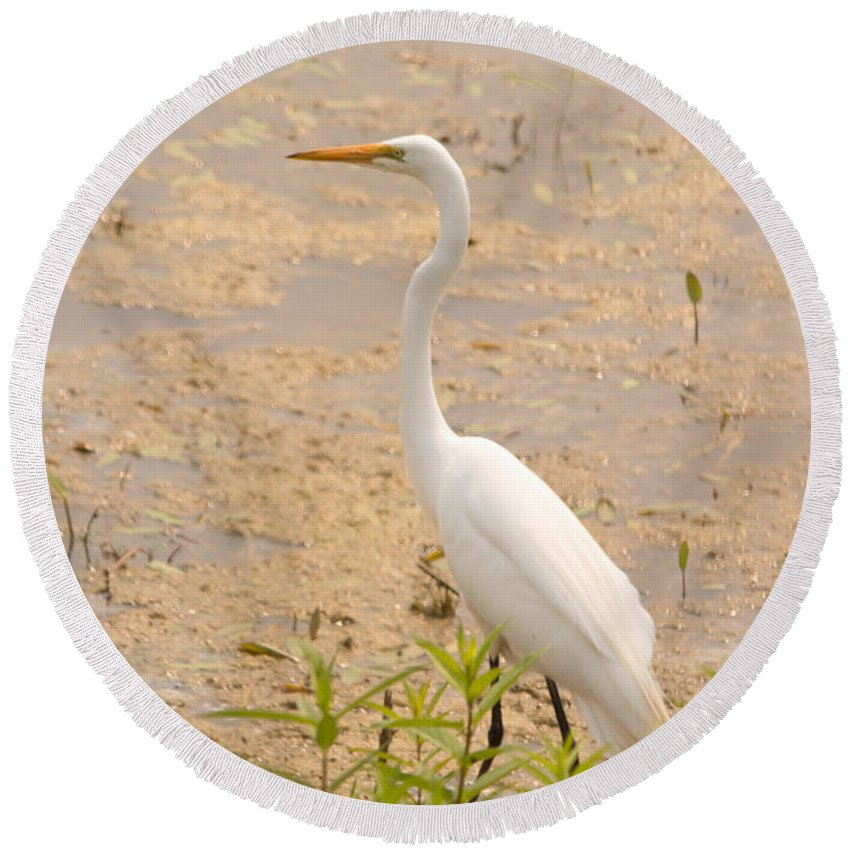 Great Egret Round Beach Towel featuring the photograph Whitey by Linda Kerkau