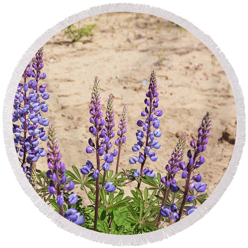 Lupinus Perennis Round Beach Towel featuring the photograph Wild Lupine Flowers by Michael Shake