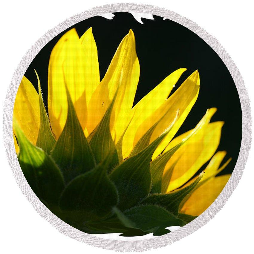 Sunflower Yellow Plant Green Photograph Phogotraphy Digital Art Round Beach Towel featuring the photograph Wild Sunflower by Shari Jardina
