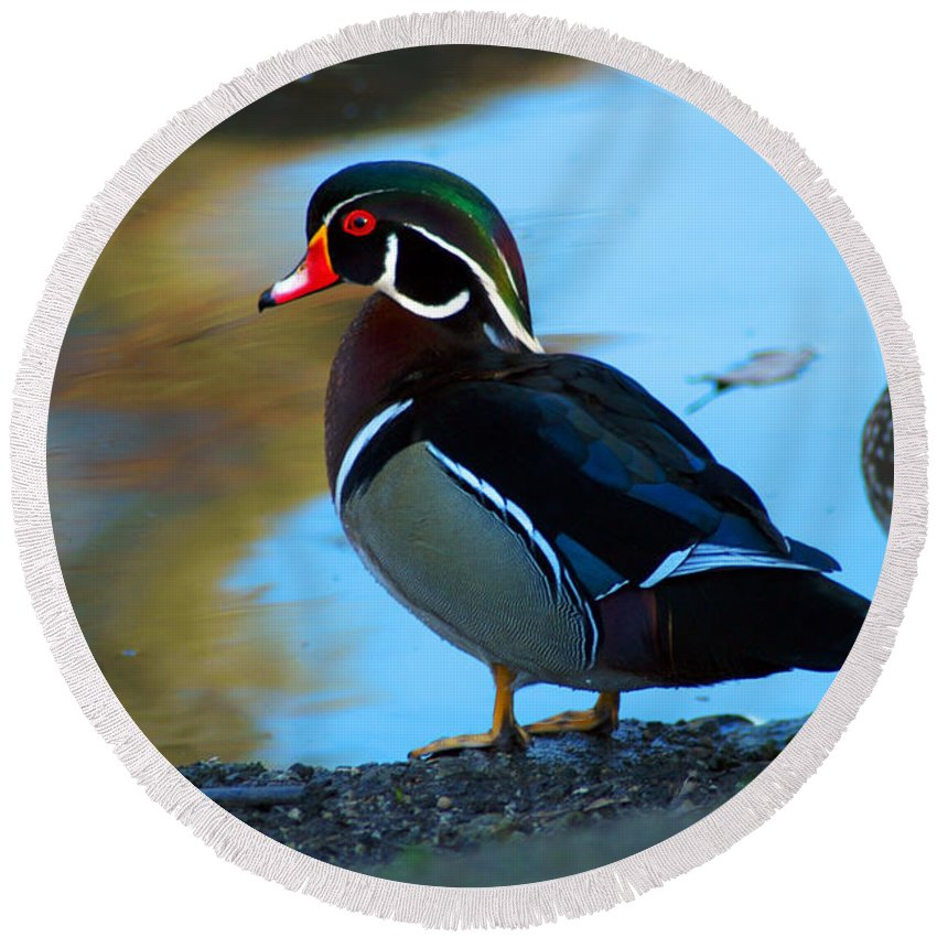 Clay Round Beach Towel featuring the photograph Wood Duck by Clayton Bruster