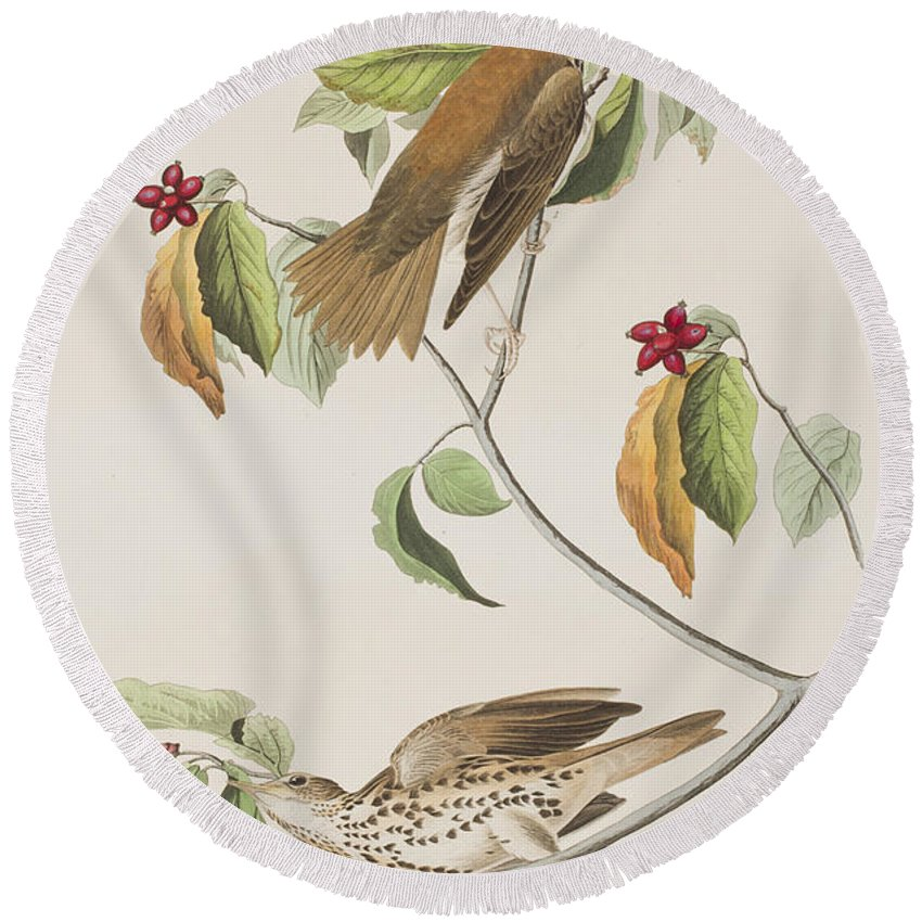 Audubon Round Beach Towel featuring the painting Wood Thrush by John James Audubon