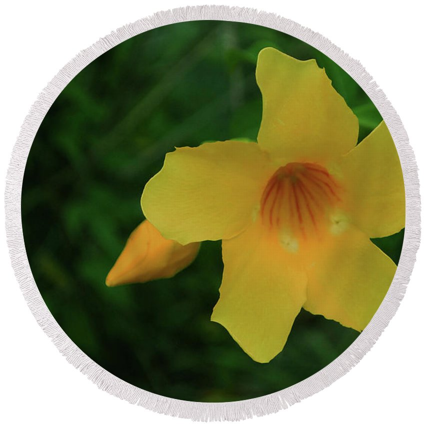 Flower Round Beach Towel featuring the photograph Yellow Beauty by Gary Wonning