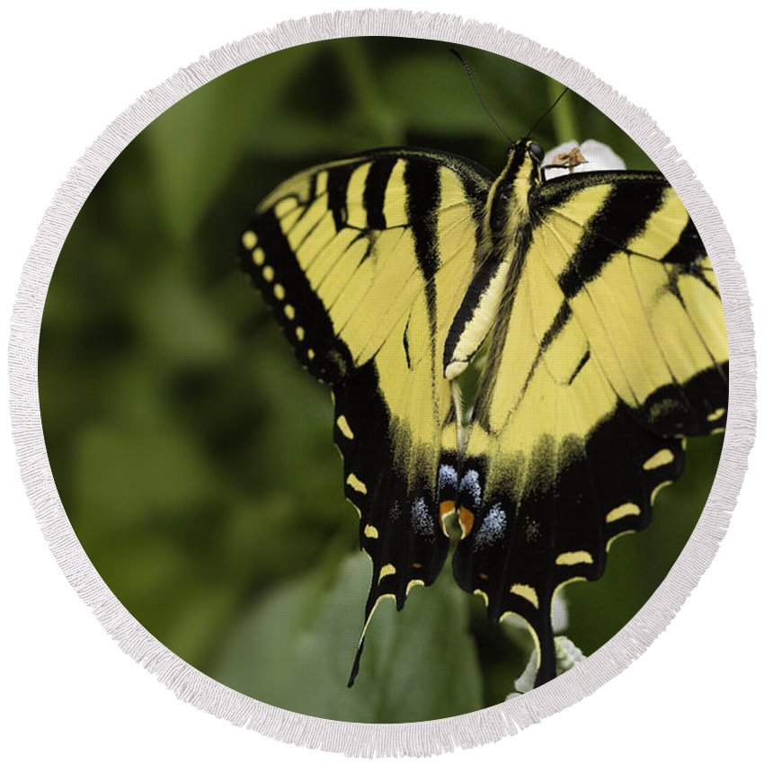 Butterfly Round Beach Towel featuring the photograph Yellow Butterfly by Billy Bateman