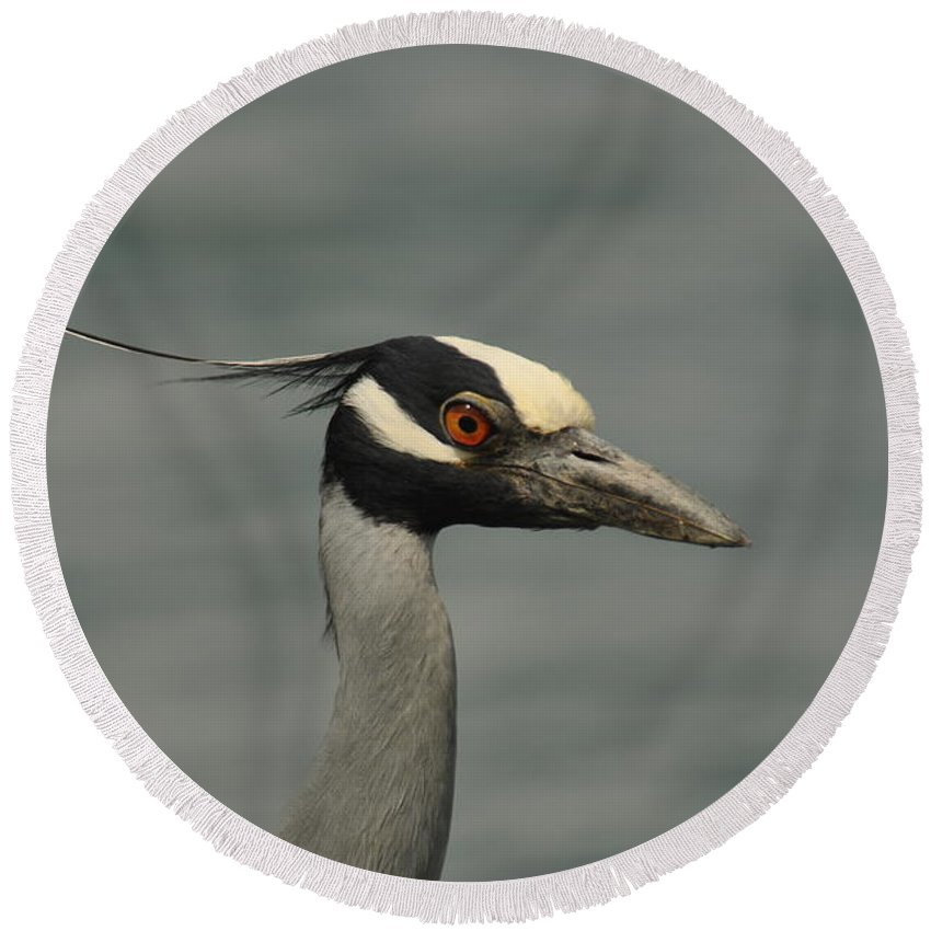 Yellow-crowned Night Heron Round Beach Towel featuring the photograph Yellow-crowned Night Heron by Frank Madia