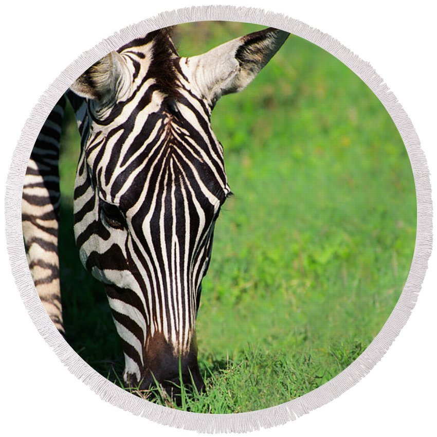Africa Round Beach Towel featuring the photograph Zebra by Sebastian Musial