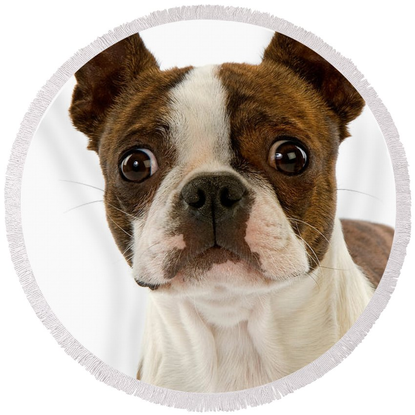 Designs Similar to Boston Terrier Dog