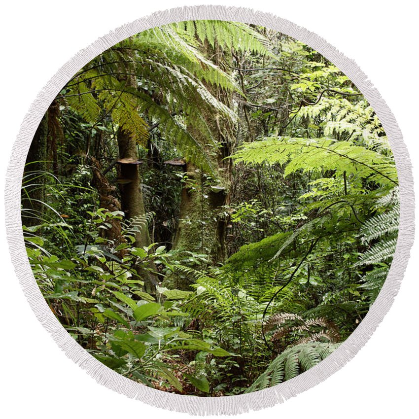 Rain Forest Round Beach Towel featuring the photograph Jungle 30 by Les Cunliffe