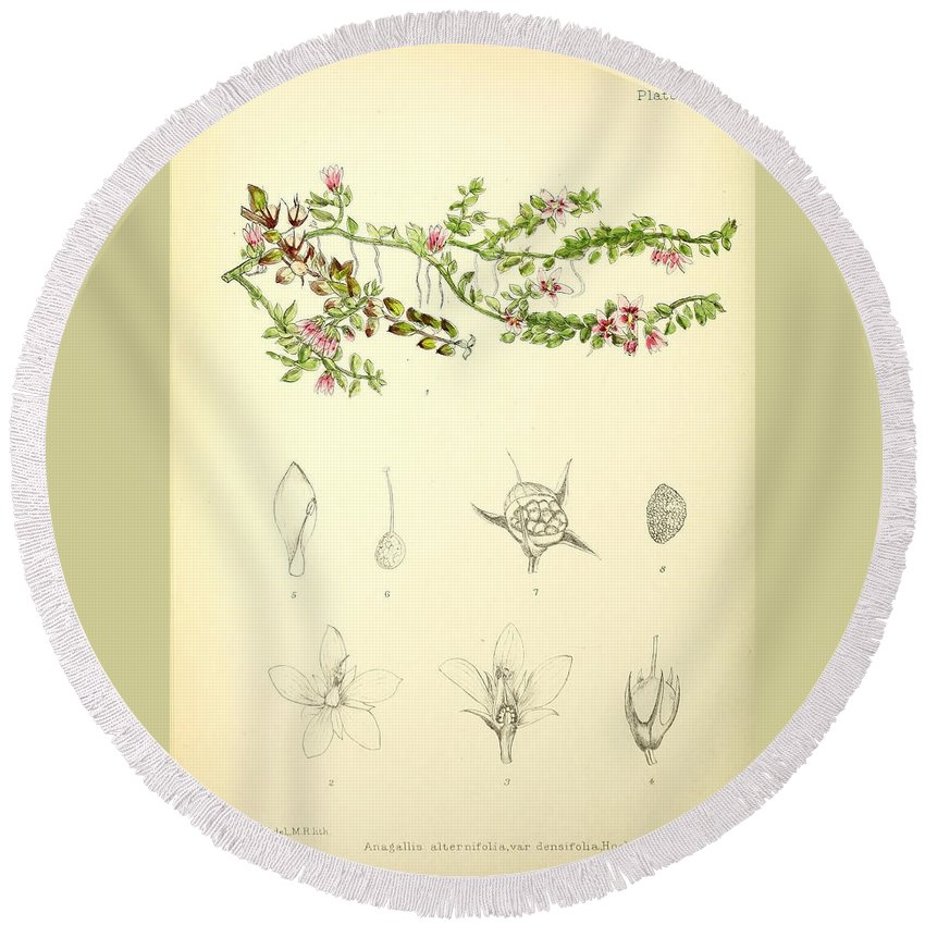 Illustrations Of The Flowering Plants And Ferns Of The Falkland Islands Round Beach Towel featuring the painting Illustrations Of The Flowering Plants And Ferns Of The Falkland Islands by MotionAge Designs