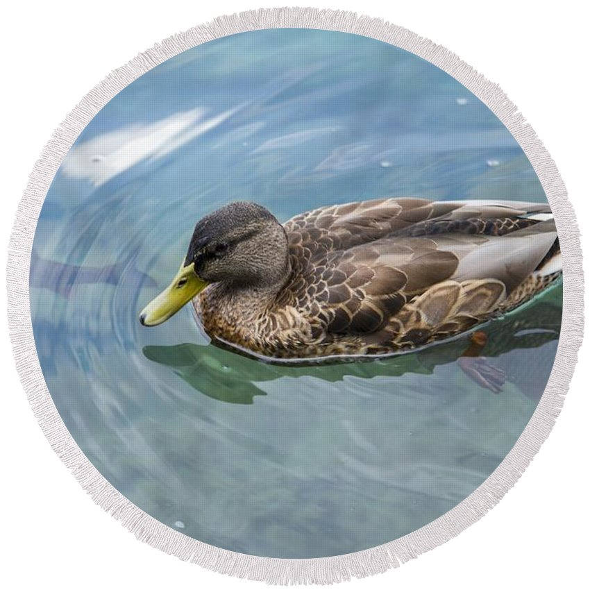 Ducks Round Beach Towel featuring the photograph Duck by FL collection