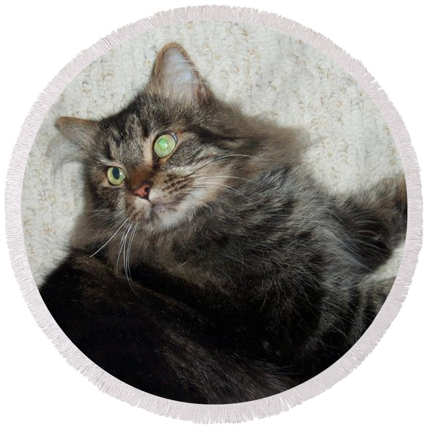 Maine Coon Round Beach Towel featuring the photograph Maine Coon Cat by Michael Munster